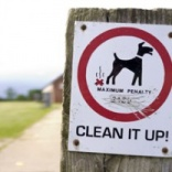 Council plans to DNA test dog waste