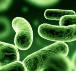 New hospital 'superbug' worry