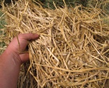 New tissue products use wheat straw and bamboo