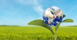 Sustainability - what is the true meaning?