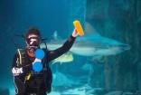 Sea Life London Aquarium starts the new year with a deep clean