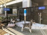 Osaka Airport opens new toilet - for dogs